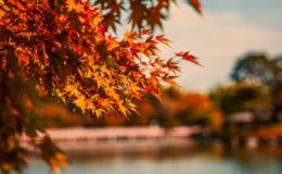 〜お彼岸に食べる秋のおやつ〜ヘルシーな「マクロビおはぎ」のレシピ_画像